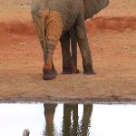 Elephants in Tsavo East - View from Dining Are