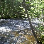 Summer Morning Along the Creek