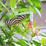 Ask about our Butterfly Conservatory Package