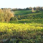 Across the vineyards at Three Choirs