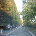 Hedge on driving past. End October 2012