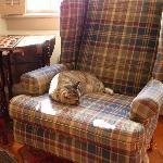 Reese the Inn's feisty cat