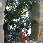 Plant niche