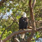 Eagle Cape Breton