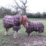 Little Horses!