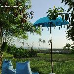 the only homestay with sea view and in front of rice paddy field