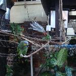 Papagaio da Pousada