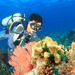 Menjangan Underwater