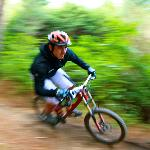 Mountain Bike Rotorua- Day Tours