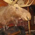 Common area nuisance: Stuffed Moose Head Infestation