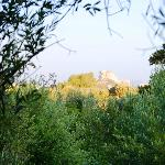 A Walk Just Beyond the Olive Grove