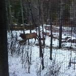 Elk behind cabin