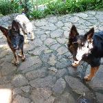 Lola and Bandit - we love them