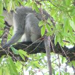 This monkey or his twin loved to steal stuff off the deck at the main lodge.