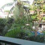 coconat palm