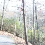 VERY Steep Driveway