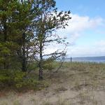 Ferry Beach pines and ocean
