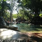 """beside the pool... """"with the trees"""""""