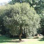 the decorated wedding tree