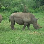 Rhino were in abundance to see up close