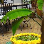 Ambiance patio Riad Limouna