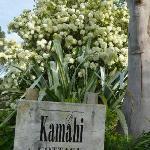 Kamahi Cottage