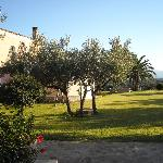 een deel van de olijvenboomgaard
