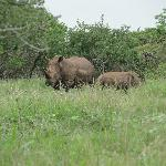 We saw rhino mama and baby after entering the gate, before even getting to reception!