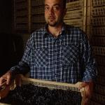 Signor Gaetano Vogadori shows part of his treasure:his grapes!