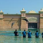 Les dauphins en action