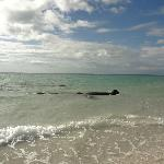 manatees at the lighthouse