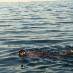 snorkeling off the PRV pier