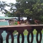 Birds on our balcony.