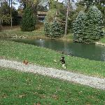 Fishing Pond and Chickens