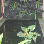 Private Koi Pond
