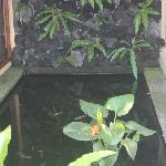 Private Koi Pond