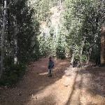 Outlook Ridge Trail, Mueller State Park
