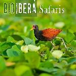Bioibera