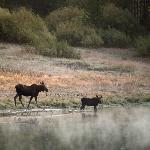 Two moose provided lakeside entertainment most mornings.  This picture was taken from our balcon