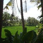 View From room (ricefield view)