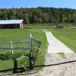 Peaceful farm scene