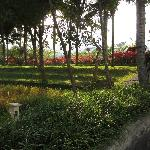 The extensive gardens of the resort