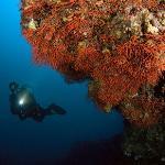 Immense pareti di corallo rosso
