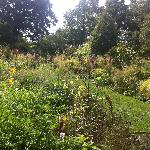 The Tennis Court garden in mid-August, Chanticleer