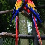 Roter Ara im Zoo