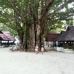 Banyan tree, center of the hotel