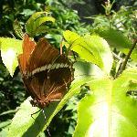 Atitlan Butterfly Center
