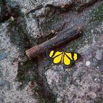 Atitlan Butterfly Center escapee