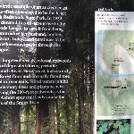 A must see near Patrick Creek Lodge...Stout Memorial Grove...