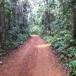 Banana trail